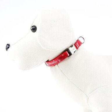 Envy Wild Forever Collar para perros color rojo