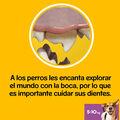 snacks_dentales_pedigree_dentastix_pequenas_56u_06_PED276743_M.jpg image number null