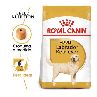 Royal Canin Labrador Retriever Adult pienso perros