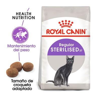 Royal Canin pienso Sterilised 37 para gatos