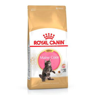 Royal Canin Gato Kitten Maine Coon 10 kg