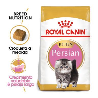 Royal Canin pienso Kitten Persian para gatos