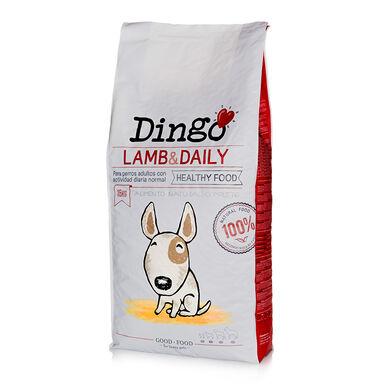 Dingo Adult Cordero