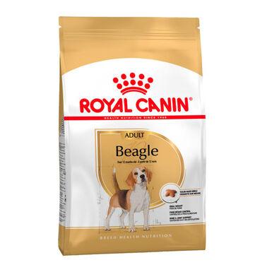 Royal Canin Beagle