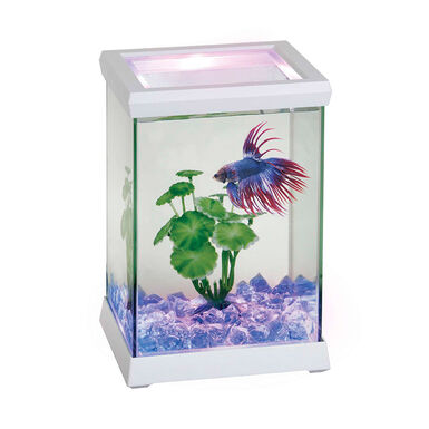 Bettera cristal ICA Space LED 4,95 l varios colores