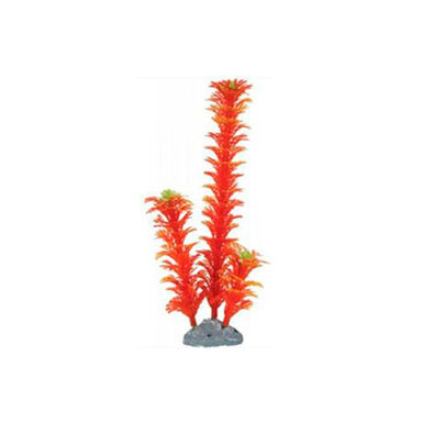 Zolux planta decorativa pequeña