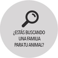 adopcion encontrar familia