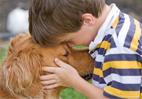 adopcion animales