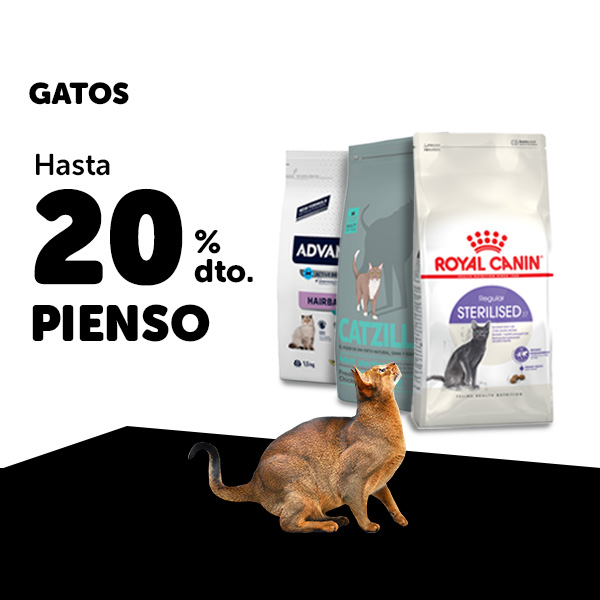 Ofertas Pienso Gato Black Friday