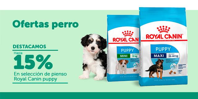 Ofertas perro - Royal Puppy
